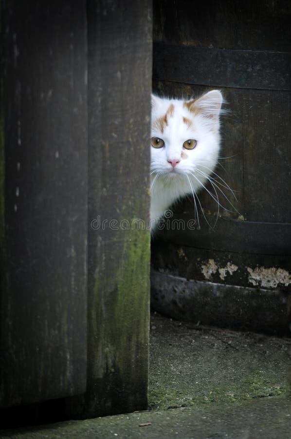 Kat die rond een poort kijken stock afbeelding