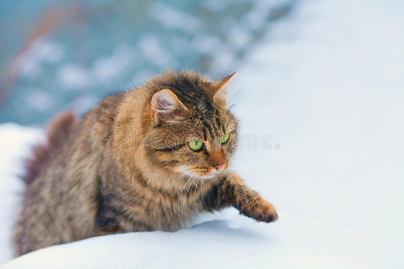 Kat die in sneeuw wekken stock foto