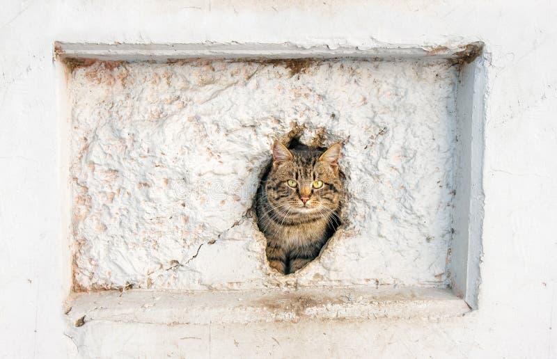 Kat die uit een gat in de muur gluren stock afbeelding