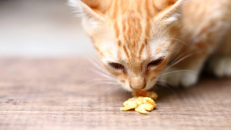 Kat die voedsel eet stock fotografie