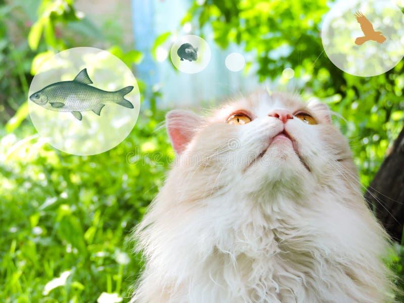 Kat die, waarschijnlijk over voedsel, met de denken denkt wolk tegen een groene achtergrond Dromende kat royalty-vrije stock fotografie