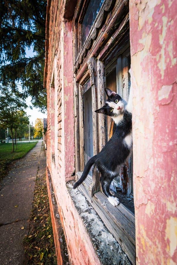 Kat die zich op het venster bevinden royalty-vrije stock afbeelding