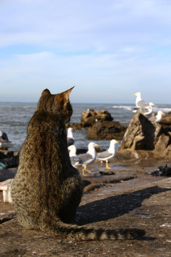 Kat die zijn maaltijd zoekt royalty-vrije stock afbeeldingen