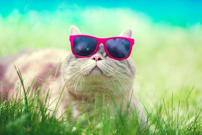 Kat die zonnebril dragen die in een gras liggen stock foto's