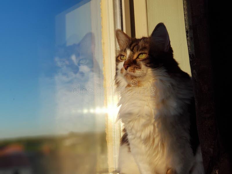 Kat in diepe gedachte stock afbeelding