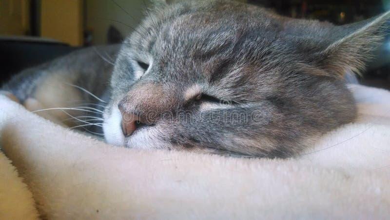 Kat in diepe slaap royalty-vrije stock fotografie