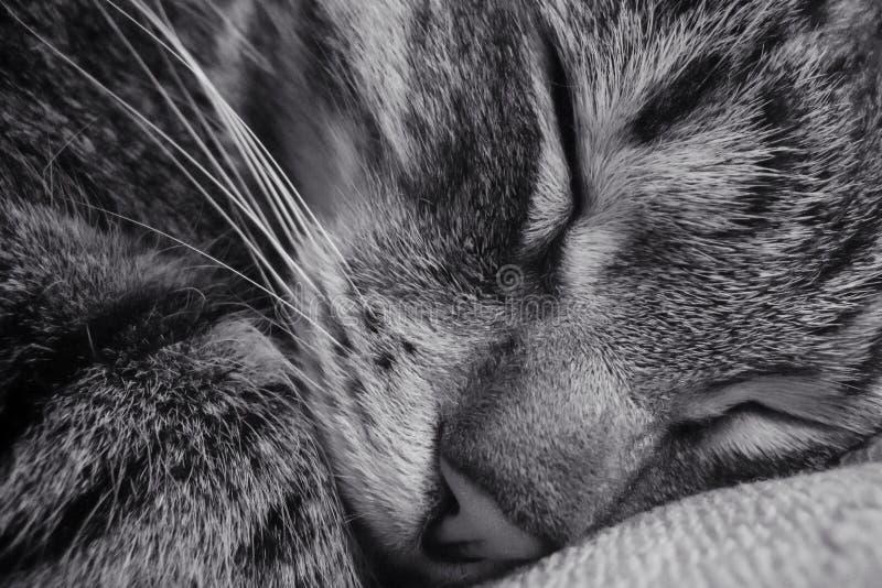Kat in diepe slaap Close-up royalty-vrije stock fotografie