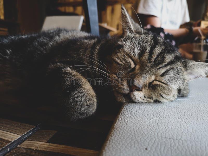 Kat in diepe slaap royalty-vrije stock foto's