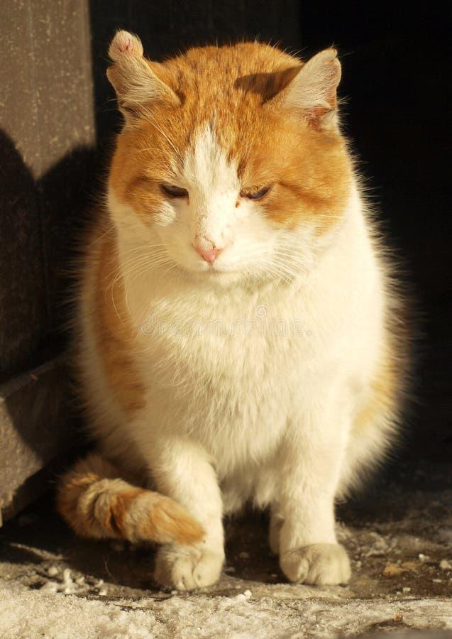 Kat door de deur royalty-vrije stock afbeeldingen