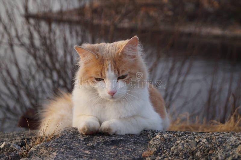 Kat door het overzees stock afbeeldingen