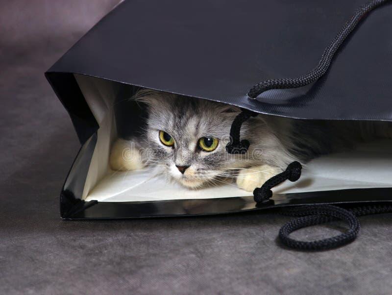 Kat in doos stock foto's