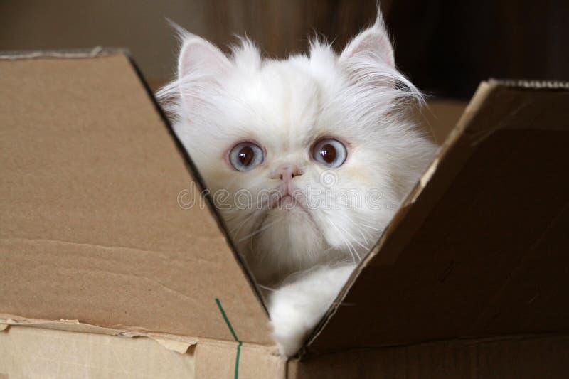 Kat in doos stock fotografie
