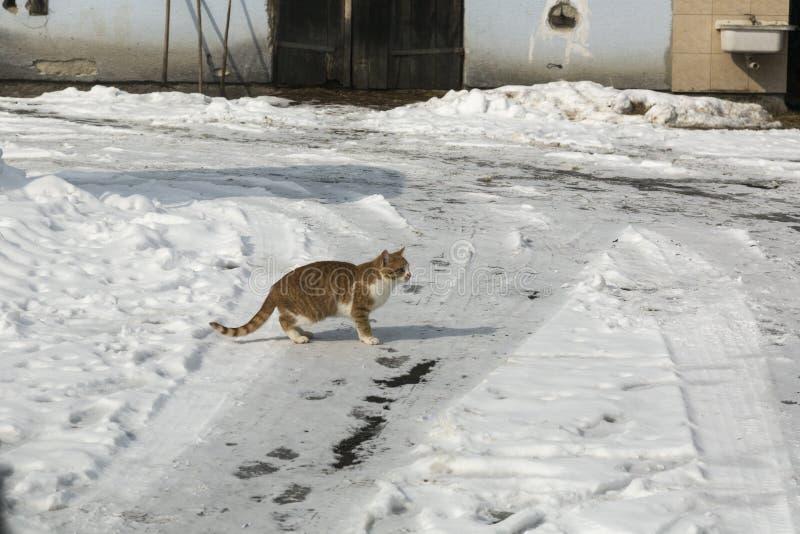 Kat in edu van de de wintertijd voor vangst stock afbeelding