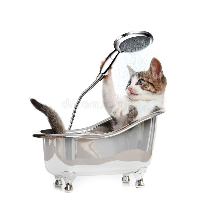 Kat in een bathtube met de douche stock foto's