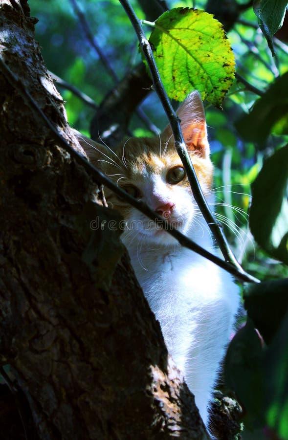 Kat in een boom royalty-vrije stock foto's