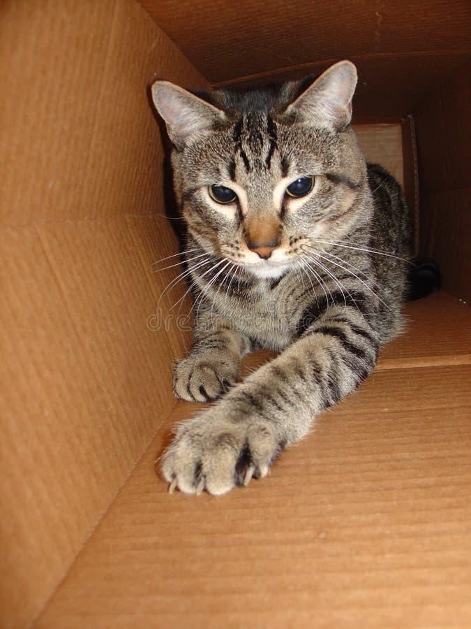Kat in een Doos stock afbeeldingen