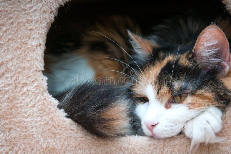 Kat in een doos royalty-vrije stock afbeeldingen