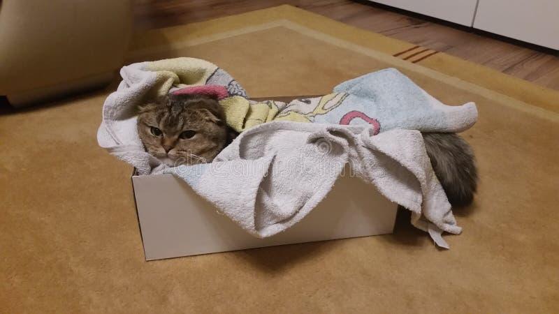 Kat in een doos royalty-vrije stock foto's