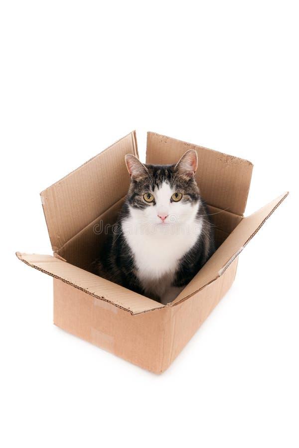 Kat in een doos, die omhoog eruit zien stock afbeelding