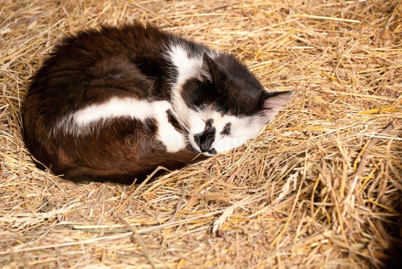 Kat in een hooi stock fotografie