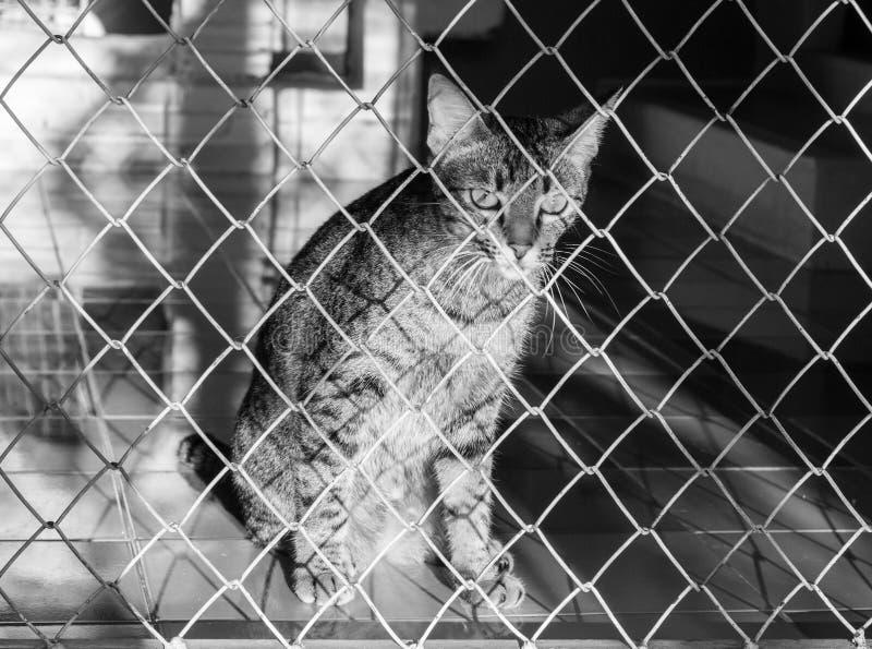 Kat in een kooi royalty-vrije stock fotografie