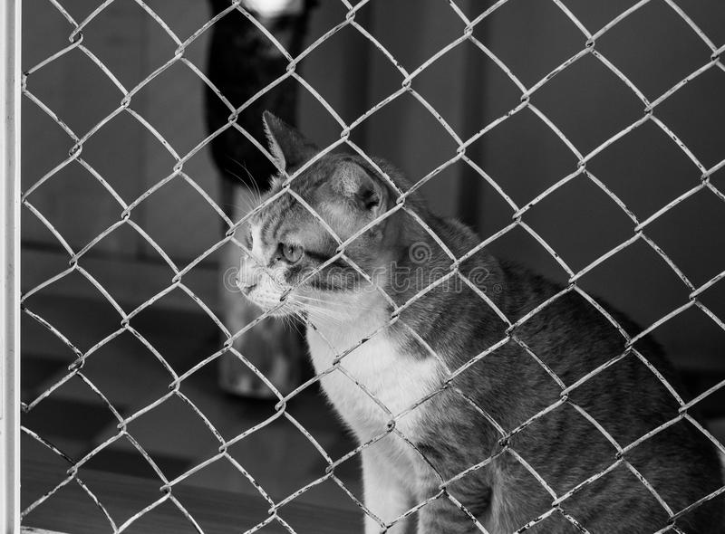 Kat in een kooi stock afbeeldingen