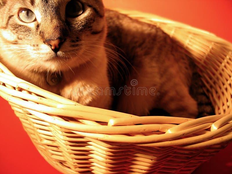Kat in een Mand stock fotografie