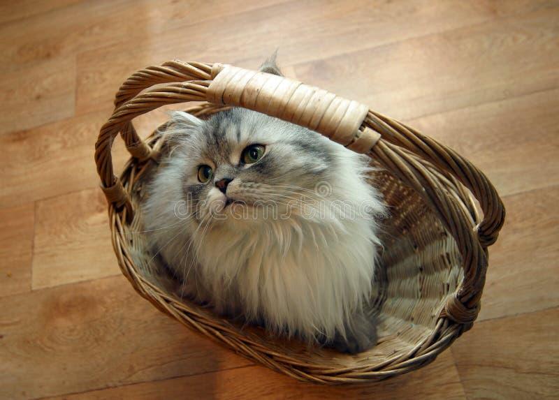 Kat in een mand - 2 stock fotografie