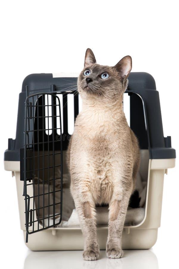 Kat in een vervoerdoos stock foto's