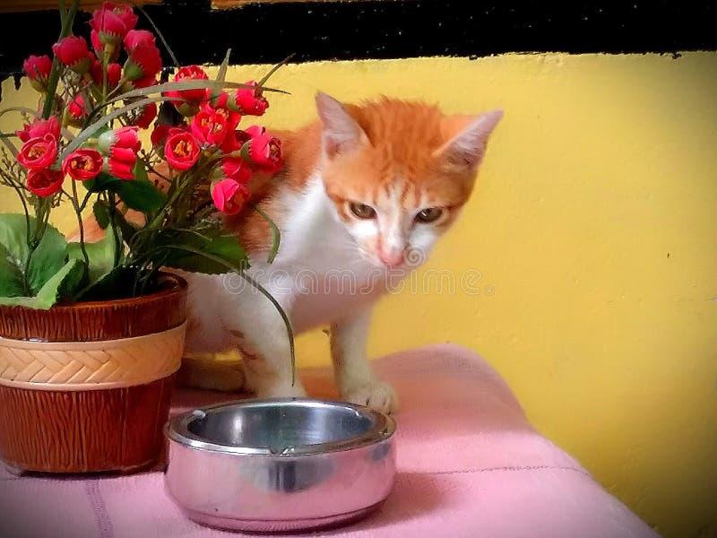 Kat en bloemen stock foto
