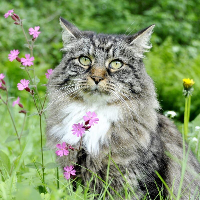 Kat en bloemen royalty-vrije stock foto's