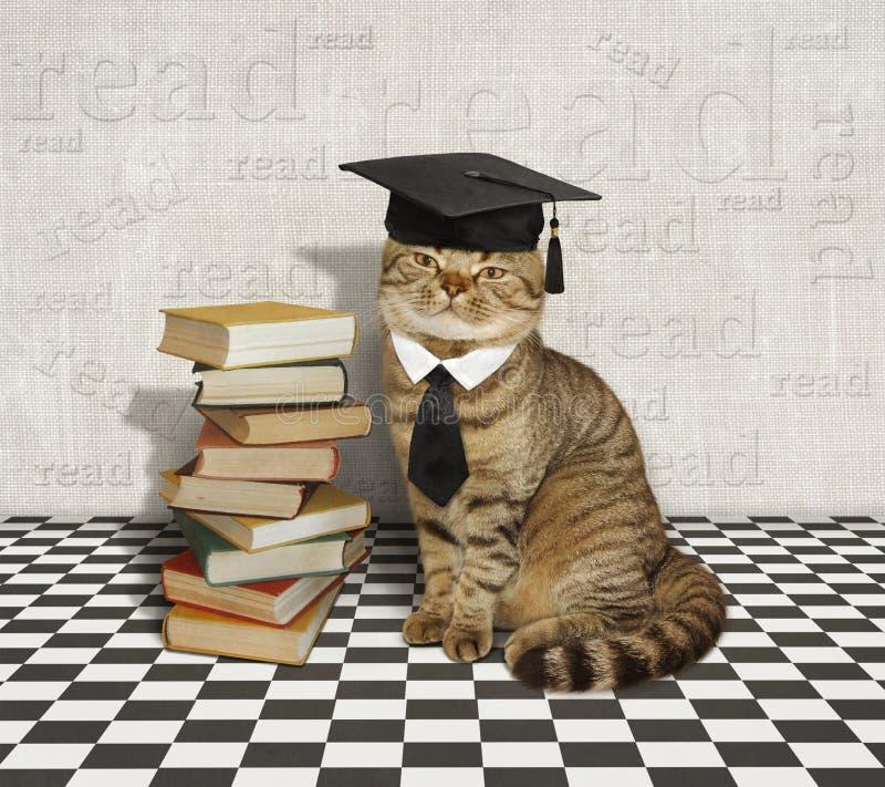 Kat en boeken stock foto