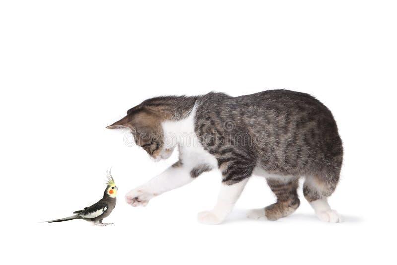 Kat en Cockatiel royalty-vrije stock afbeeldingen