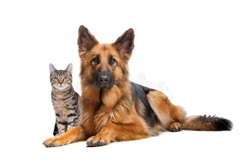 Kat en een Duitse herderhond royalty-vrije stock afbeelding