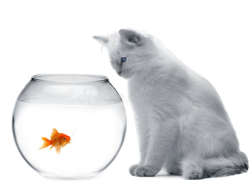 Kat en een gouden vis stock foto's