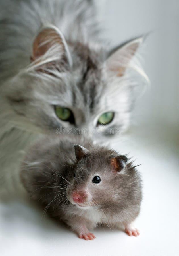 Kat en hamster royalty-vrije stock fotografie