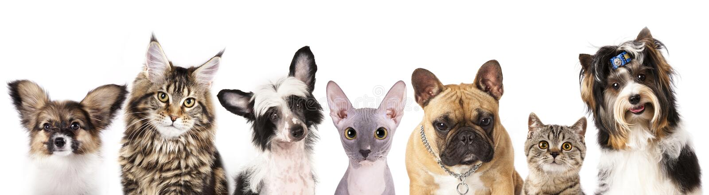 Kat en hond royalty-vrije stock afbeeldingen