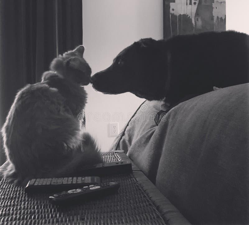 Kat en hond beste vrienden royalty-vrije stock afbeelding