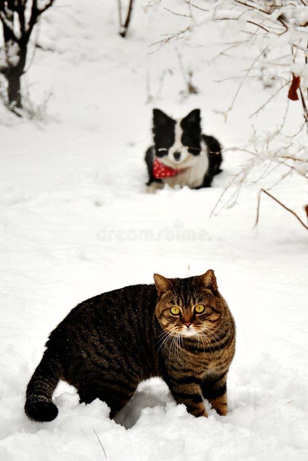 Kat en hond in de sneeuw stock afbeelding