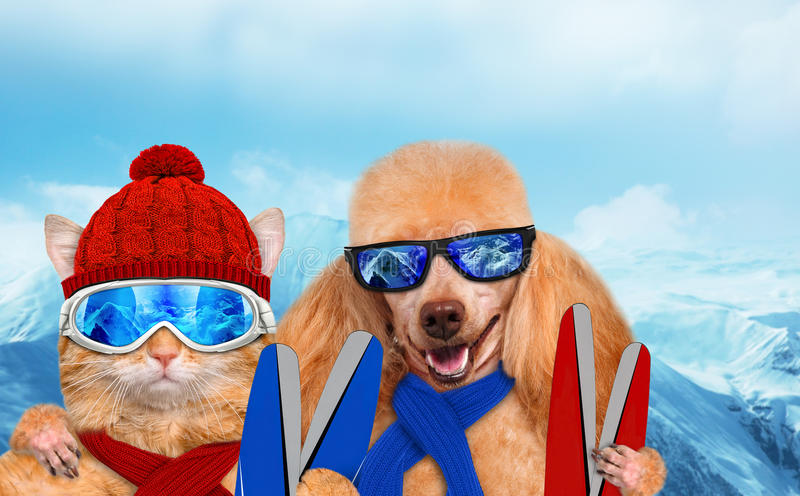 Kat en hond die skibeschermende brillen dragen die in de berg ontspannen stock afbeeldingen