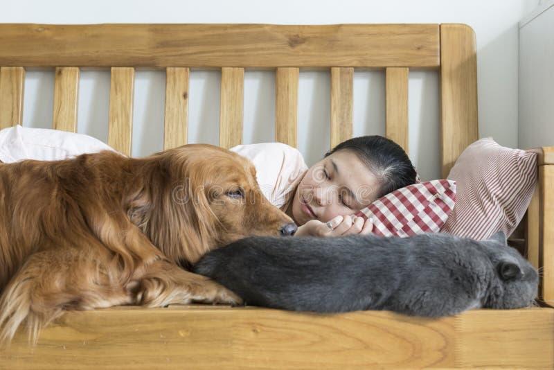 Kat en hond en meisjesslaap royalty-vrije stock foto