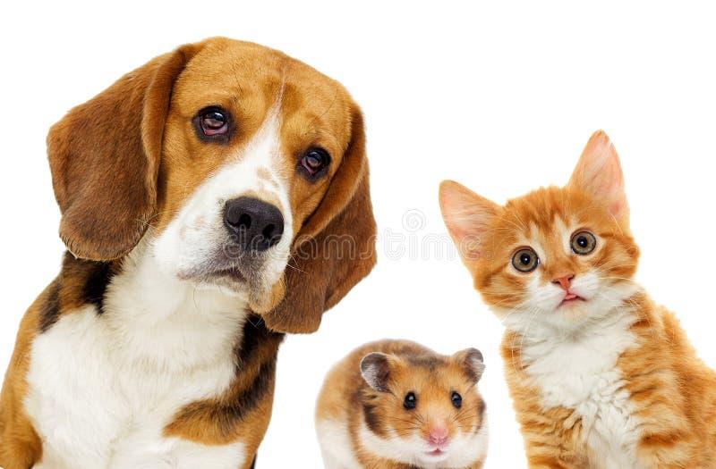 Afbeeldingsresultaat voor hond poes hamster