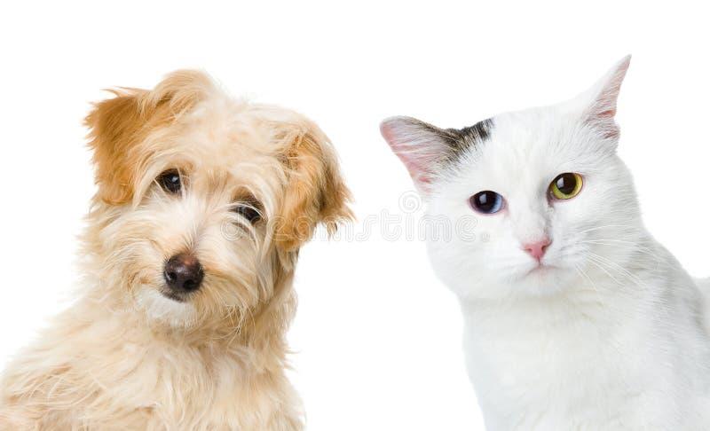 Kat en hond het kijken en camera Geïsoleerdj op witte achtergrond royalty-vrije stock afbeelding