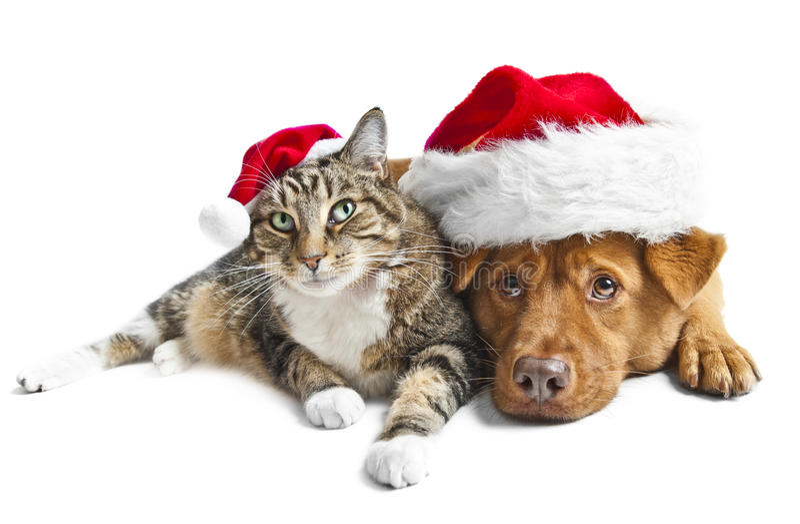 Kat en hond met de rode hoeden van de Kerstman royalty-vrije stock fotografie