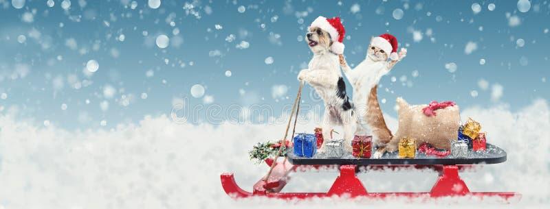 Kat en Hond op Kerstmis Santa Sleigh stock fotografie
