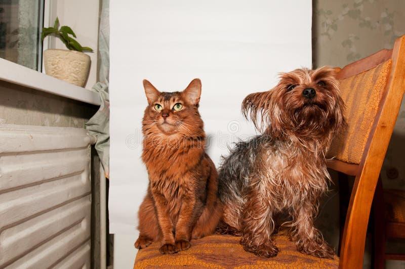 Kat en hond samen royalty-vrije stock foto's