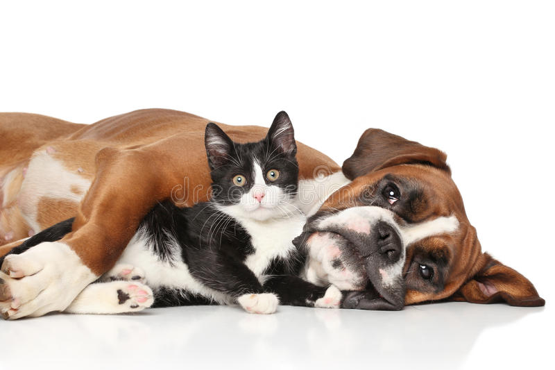 Kat en hond samen stock afbeeldingen