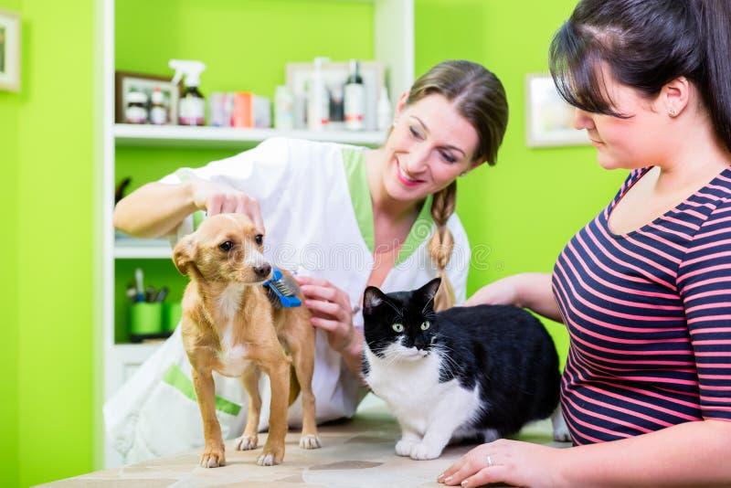 Kat en hond samen bij dierenarts of huisdierenkapper stock foto's