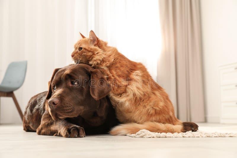 Kat en hond samen op vloer binnen royalty-vrije stock fotografie