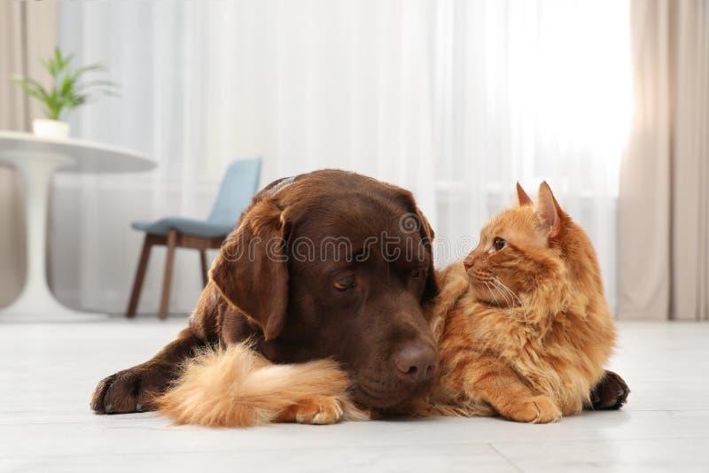 Kat en hond samen op vloer binnen stock afbeeldingen
